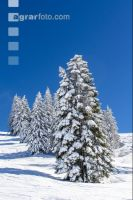 Winter im Gebirge 7