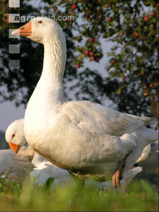 100% authentic 3362c d154f Bilder & Fotos aus Landwirtschaft & Natur, Videos, Stock ...